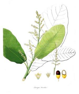 menyanthes trifoliata homöopathie